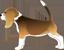 Adharamaj Beagle